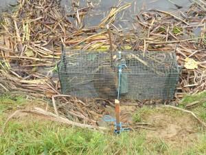cage à trappe